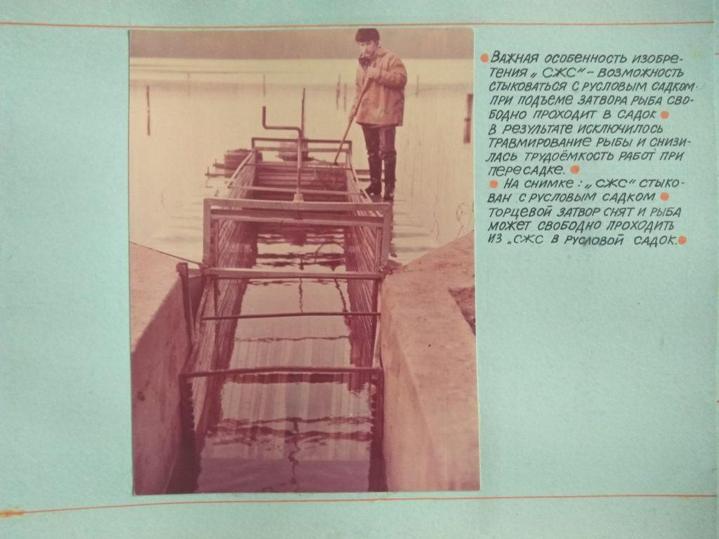 """Важная особенность изобретения """"СЖС"""" - возможность стыковаться с русловым садком при подъеме затвора рыбы свободно проходит в садок."""