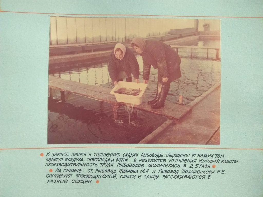 В зимнее время в утепленных садках рыбоводы защищены от низких температур воздуха, снегопада и ветра. В результате улучшения условий работы, производительность труда рыбоводов увеличилась в 2.5 раза.